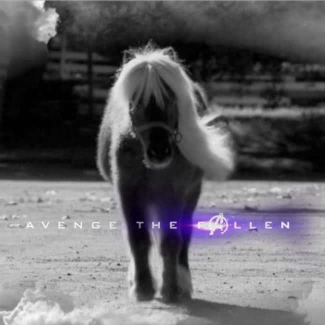Avenge the Fallen Meme Lil Sebastian