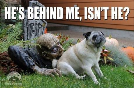 Zombie Meme dog sitting in front of halloween decoration zombie